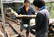 椎茸(原木栽培)